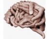 Brain formed of hands